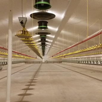 Daly Poultry Farm